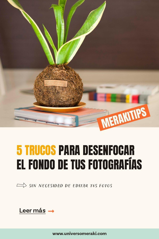 5 trucos para desenfocar el fondo de tus fotografías